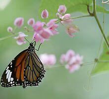 Butterfly 5 by David Clarke