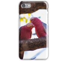 Preening Partner Galahs iPhone Case/Skin