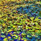 Lily Pond at Spur Cross Ranch by Roger Passman