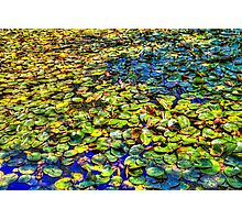 Lily Pond at Spur Cross Ranch Photographic Print