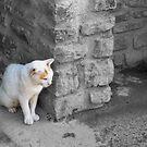 Peek a Boo Cat by Vagelis Georgariou