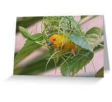 Golden Palm Weaver 7 Greeting Card