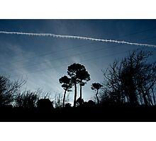 Maenporth Trees Photographic Print