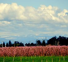 SPRING TIME IN THE VALLEY by davesdigis