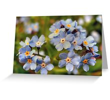 Forget-Me-Knots Greeting Card