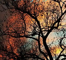 Thinking of You, Fire Tree by Peri