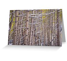 Early Winter Aspens Greeting Card