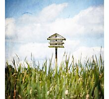 meadowland Photographic Print