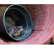 Toad in a Pot Photographic Print