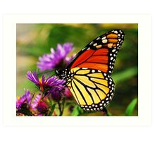Monarch and Aster Art Print
