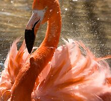 Flamingo Bath by Karen Kaleta