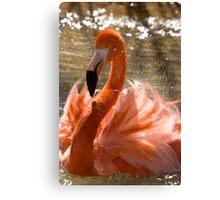 Flamingo Bath Canvas Print
