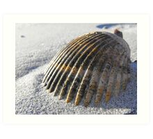Seashell Art Print