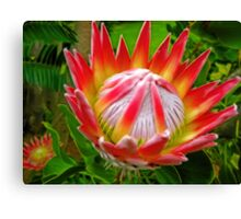 King Protea, South Africa Canvas Print
