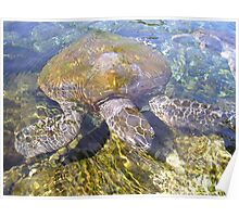 Sea Turtle, HD Photograph Poster