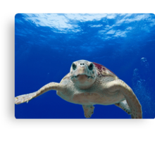 Beautiful Ocean Turtle, HD Photograph Canvas Print