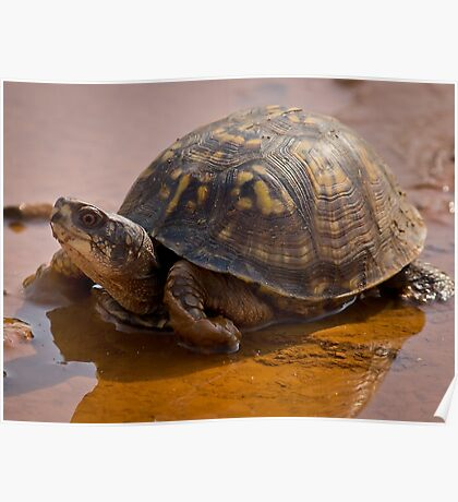 Pond Tortoise, HD Photograph Poster