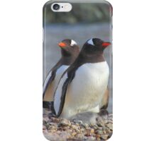 Pair of Gentoo Penguins on the Nest with Chicks iPhone Case/Skin