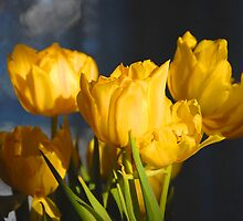 Yellow Tulips 0002xx by DavidClements