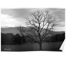 The Tree in the Field at Cades Cove Poster