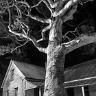 Woodford Academy, Blue Mountains by Deephill
