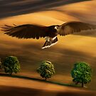 Flight by Cliff Vestergaard