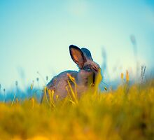 Grass Fed Bunny by ShotsOfLove