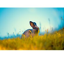 Grass Fed Bunny Photographic Print