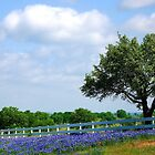 Texas Hill Country by Sandra Moore