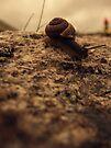 Snaily by schizomania