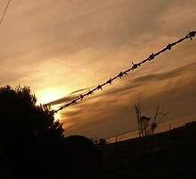 barbed wire by Tom Doyle