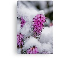 small flower in the snow Canvas Print