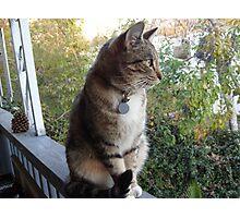 Neighborhood Watch Photographic Print