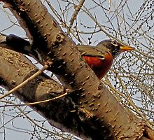 First Signs Of Spring In Iowa by Linda Miller Gesualdo