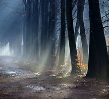 Woodlight by berin