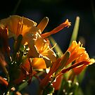 Daylillies at Dawn by Brian Dodd