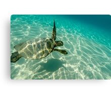 Hawaii Green Sea Turtle!! Canvas Print