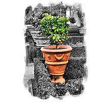Tuscan Garden Photographic Print