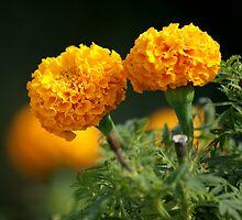 Flower of joy by Shubhrajit Chatterjee