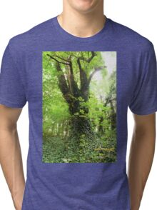An Old Forest Bathed in Bright Light Tri-blend T-Shirt