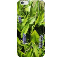 Purple Pickerel  iPhone Case/Skin