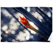 Flower in Tropical Garden Poster