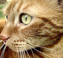 Tigger's Profile by down23