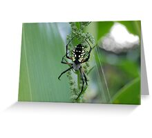 spider on my corn!! Greeting Card