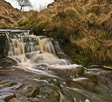 Dean Black Brook, Wheelton Moor, Lancashire by Steve  Liptrot