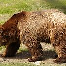 bear by juan jose Gabaldon