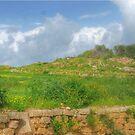Typical maltese field walls by Rosalie M