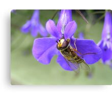 Love these lobelia flowers..... Canvas Print