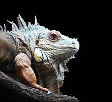 Iguana by Mystic Raven Art