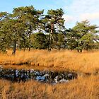 Kalmthoutse Heide by Gilberte